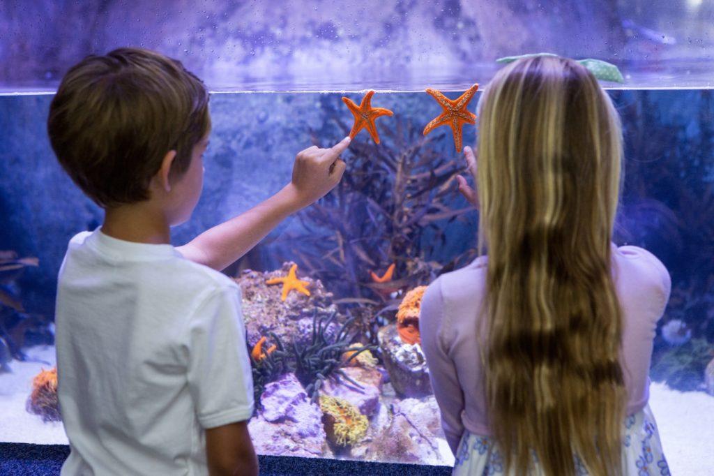 klopfen ans aquarium