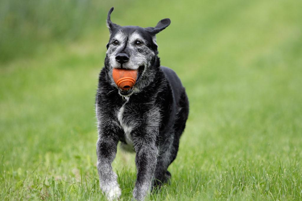 mischlingshund mit ball