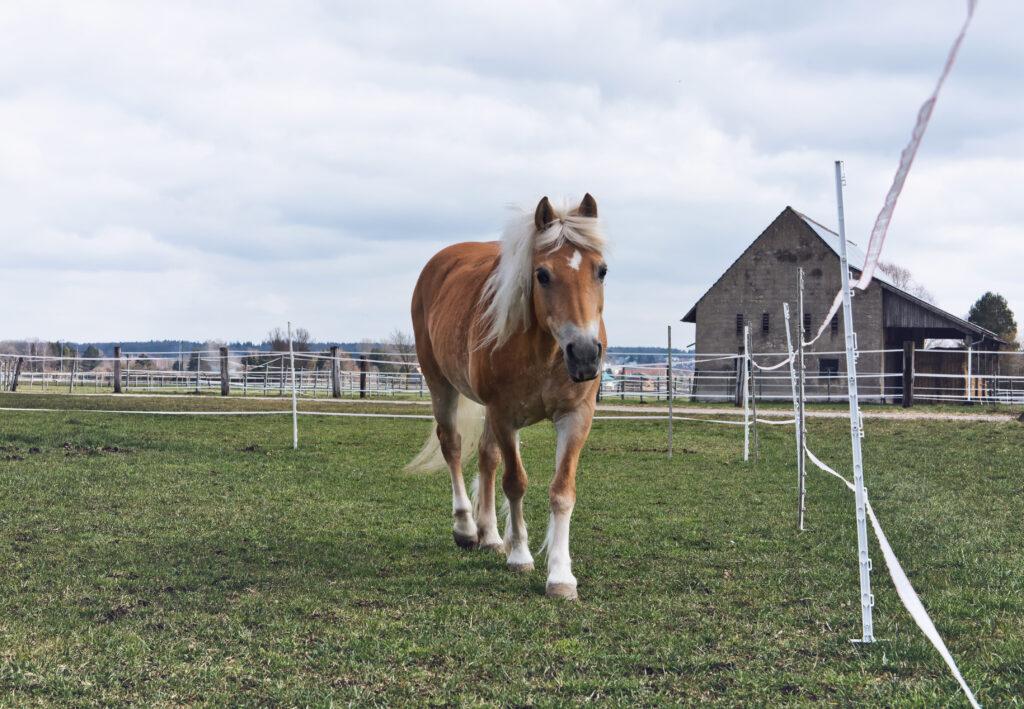 Ein Pferd auf einer Wiese für Offenstallhaltung