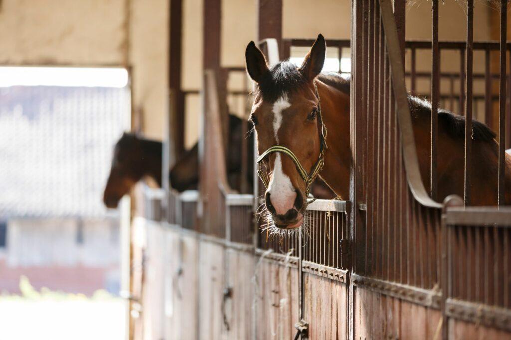 Pferde in ihren Boxen im Stall