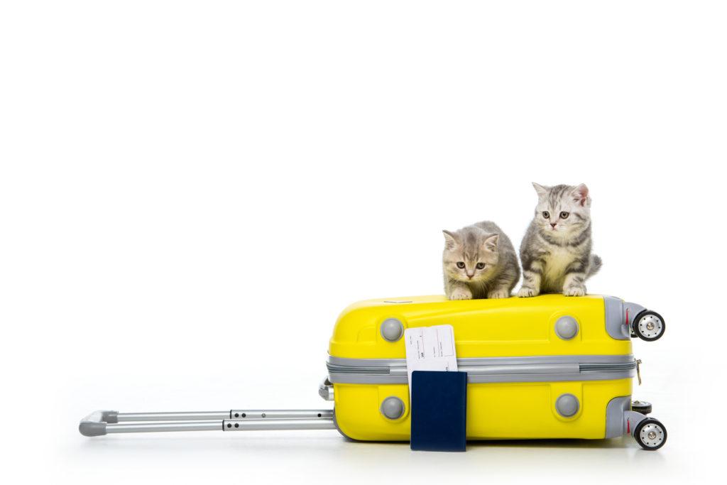 katzen reisen