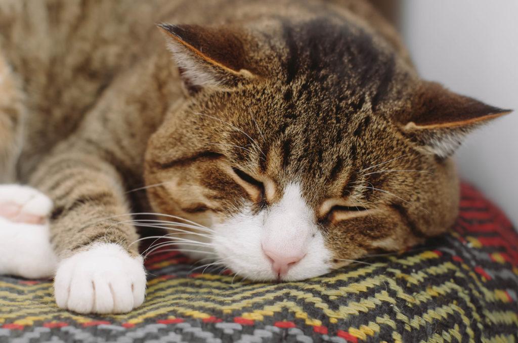 futter für alte katzen