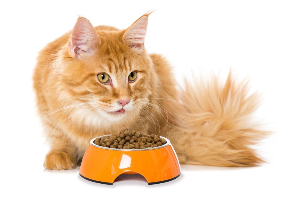 welches katzenfutter