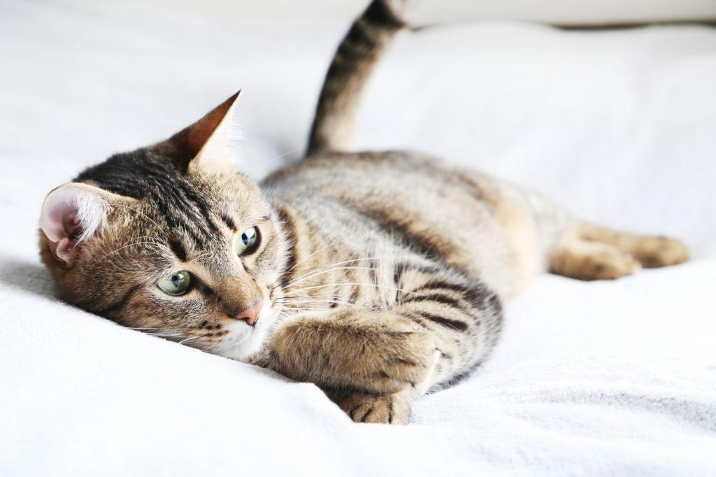 Wurmer Bei Katzen Wurmarten Vorbeugung Und Behandlung Zooplus