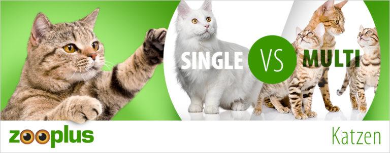 Einzelmieze vsMehrkatzenhaushalt