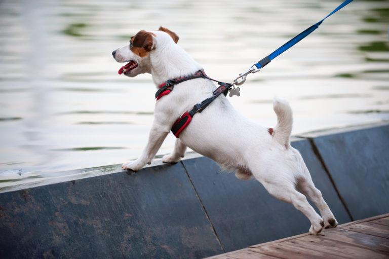 geschirr oder halsband für den Hund