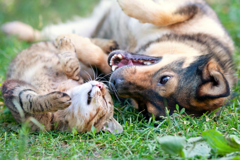 hundehalter vs katzenhalter