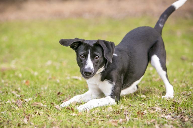 reinrassig vs mischling hund