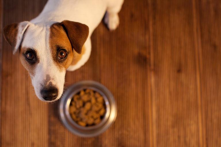 Hypoallergenes Futter für Allergiker-Hunde