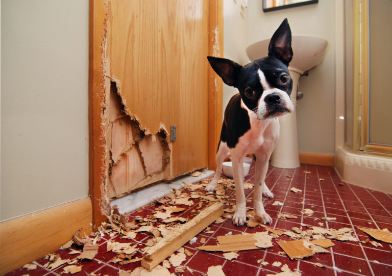 Hilfe, mein Hund zerstört alles