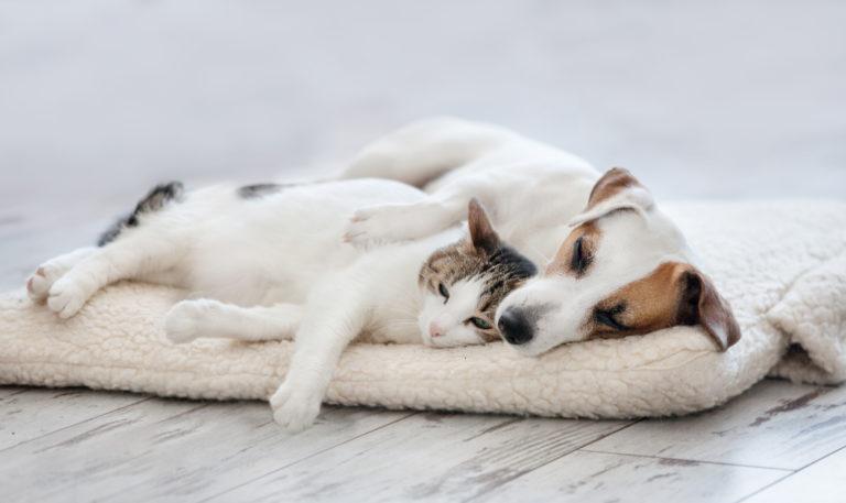 Erstes kennenlernen hund und katze