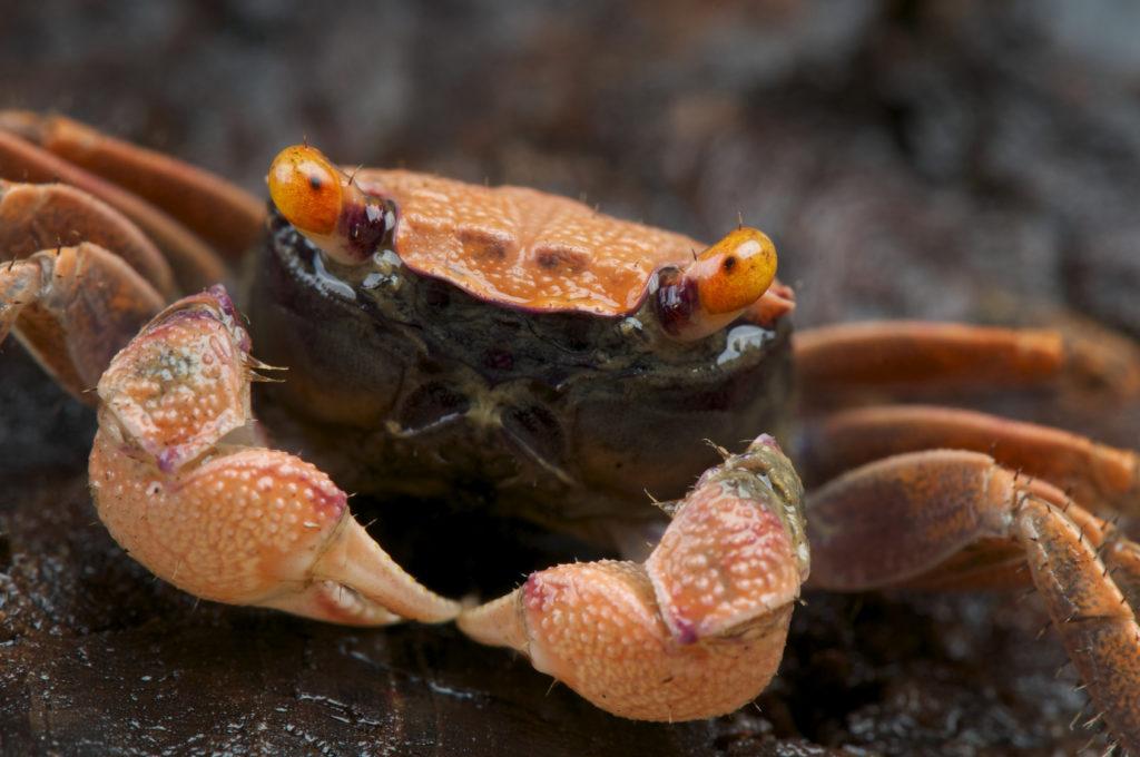 krabben im aquarium