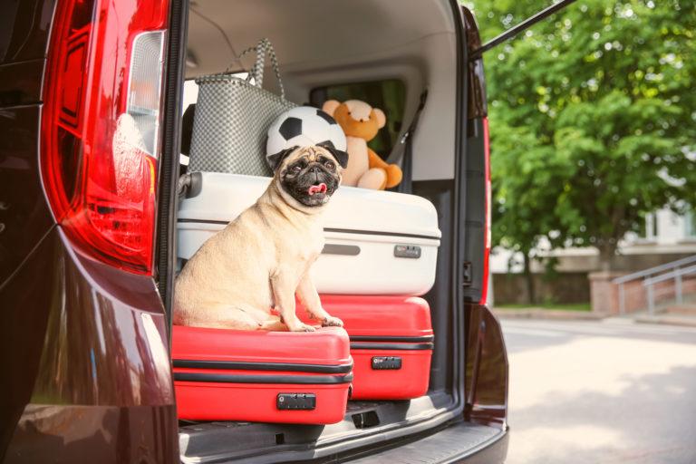 mit hund reisen auto oder flugzeug