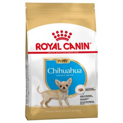 chihuahua ernährung
