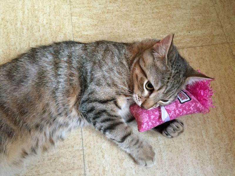 kućna-mačka-igra