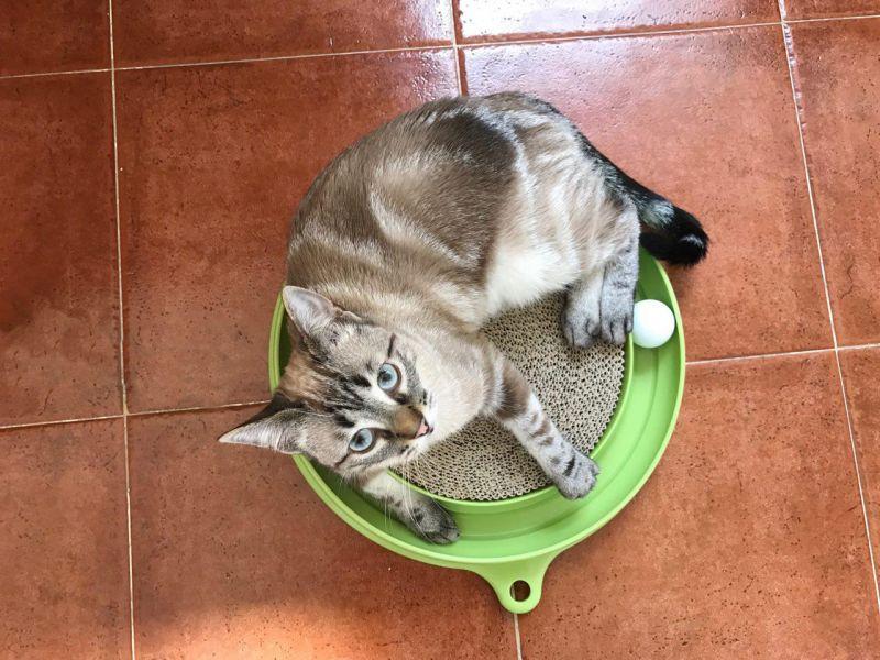 kućna-mačka-zabava