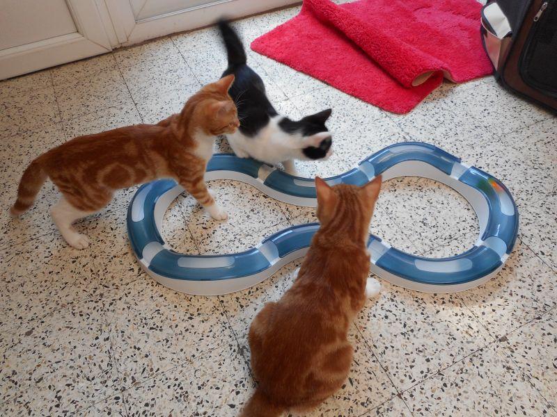 igračka-za-mačke