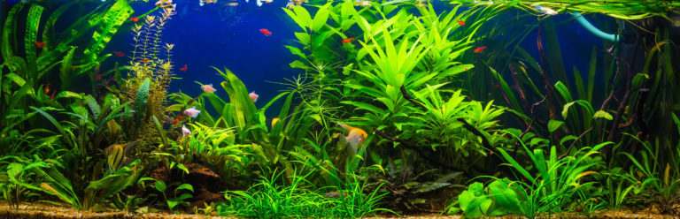 s wasserfische zierfische f rs aquarium zooplus magazin. Black Bedroom Furniture Sets. Home Design Ideas