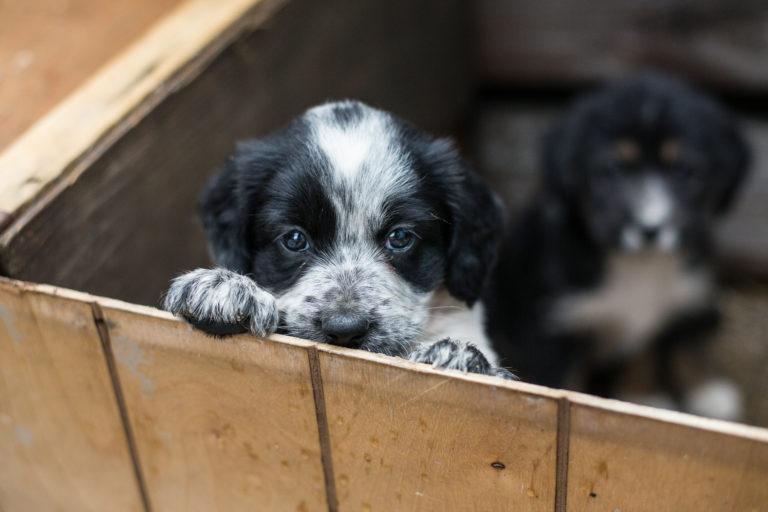 welpen aus dem tierheim adoptieren