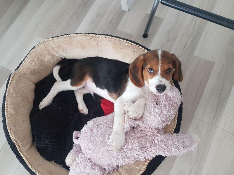 Ein Hund liegt in einem Kuschelbett mit einem Stofftier