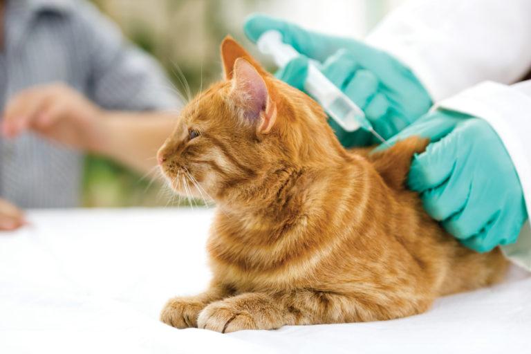 Katzen Impfen Lassen Welche Impfungen Sind Notwendig Zooplus