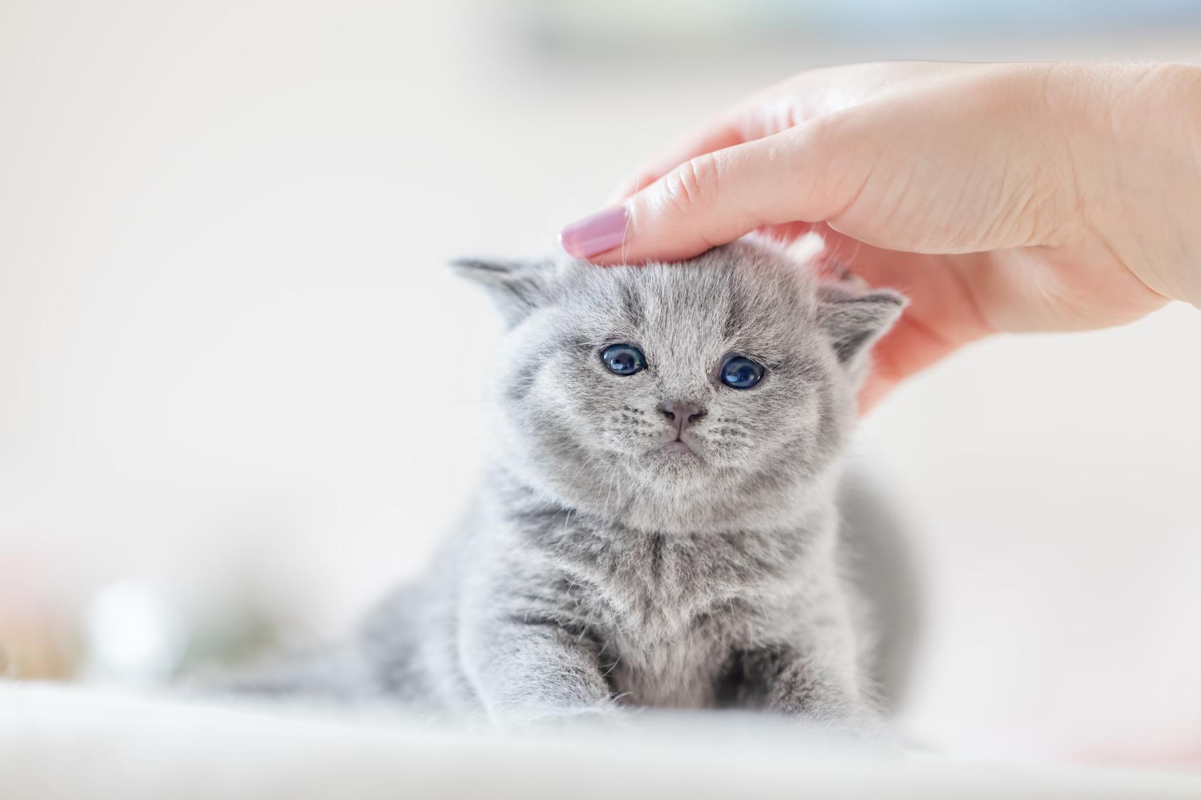 kitten entwurmen