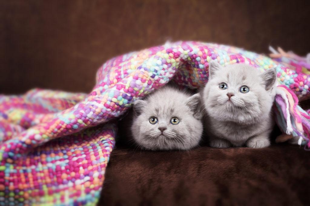 Kitten im Korb mit Decke