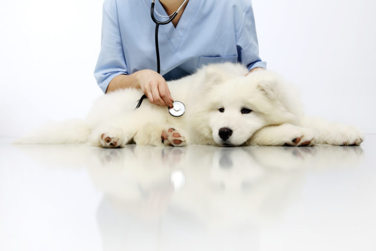 Blasenentzündung (Zystitis) beim Hund