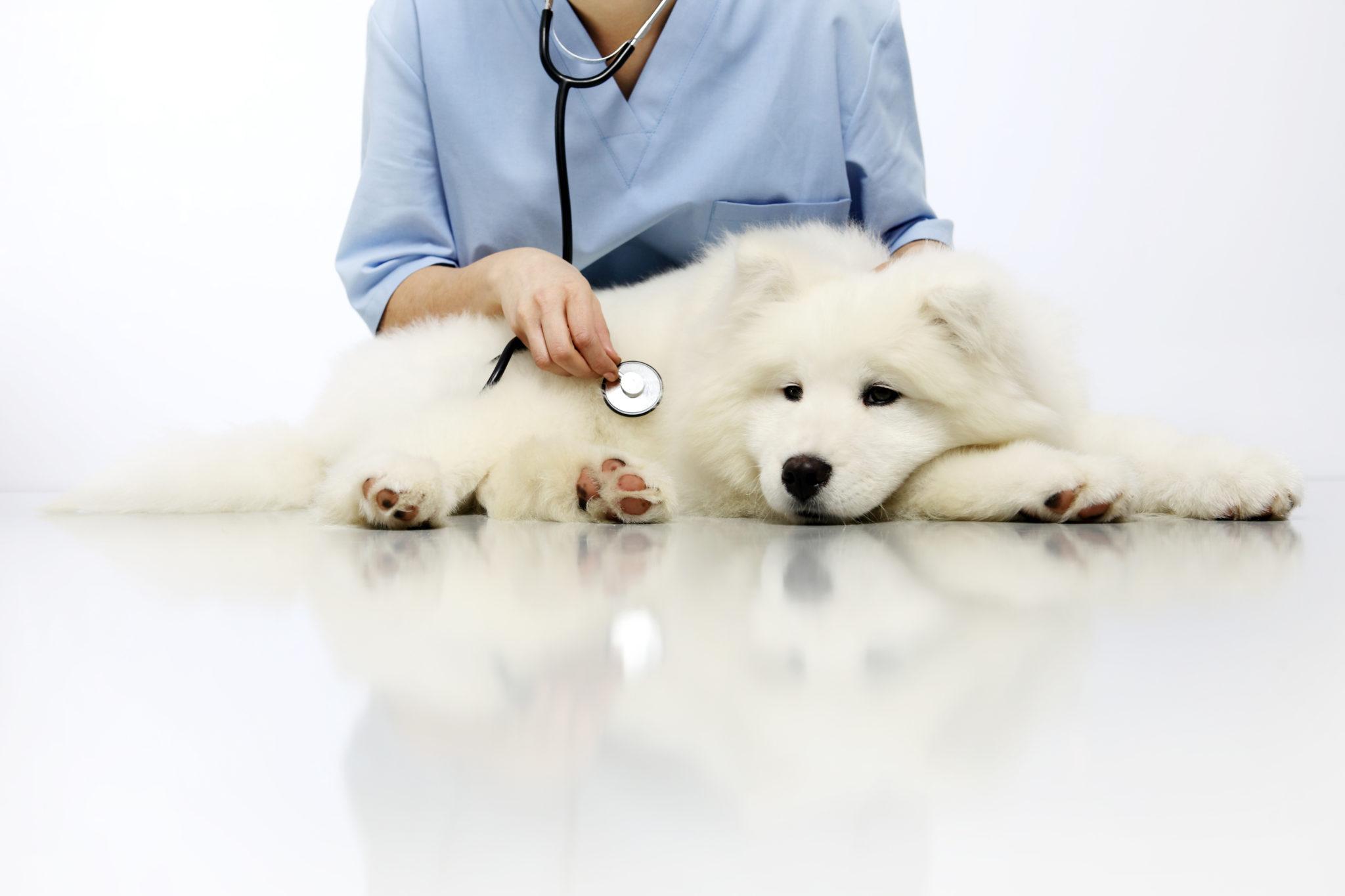 Blasenentzündung (Zystitis) beim Hund | Symptome & Behandlung