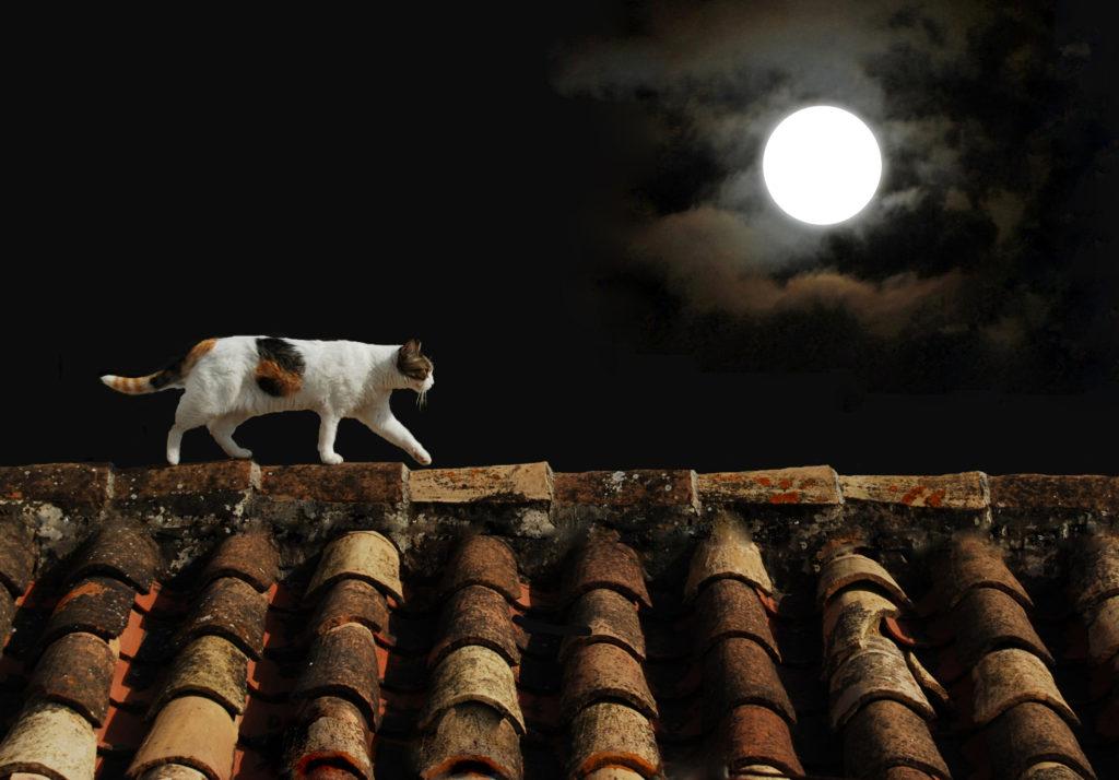 Katze geht nachts aus