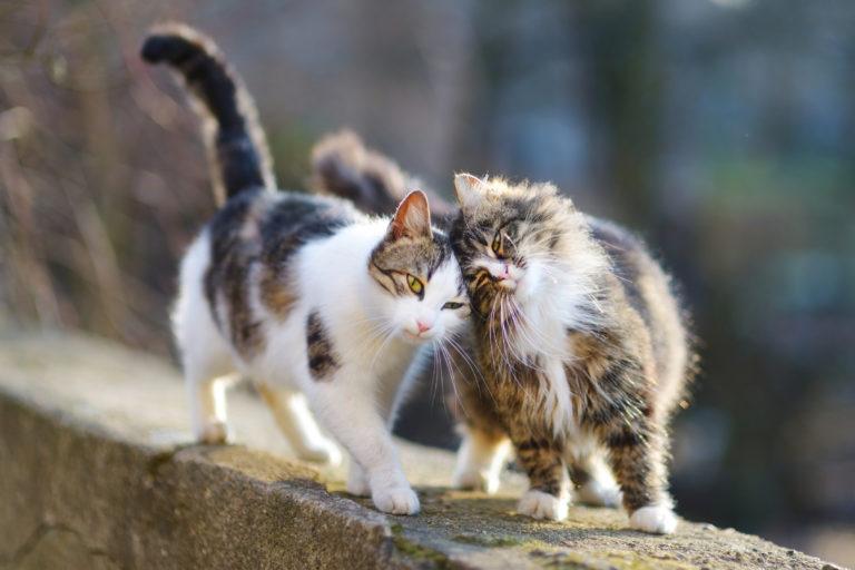 katze kastrieren oder sterilisieren