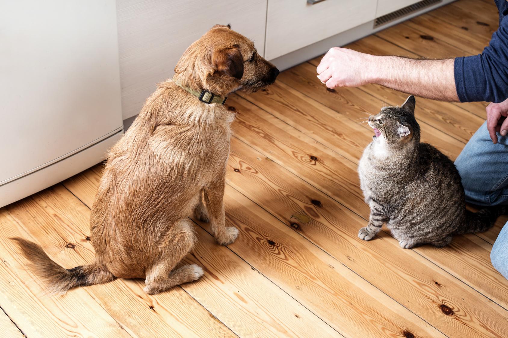 kann ich meinem hund katzenfutter geben zooplus hundemagazin. Black Bedroom Furniture Sets. Home Design Ideas