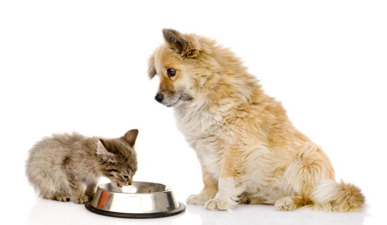 kann ich meinem hund katzenfutter geben