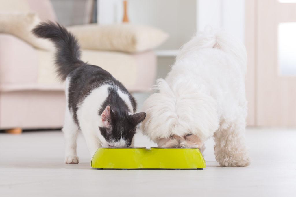 katzen hundefutter