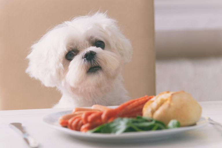 lebensmittel die hunde nicht essen dürfen