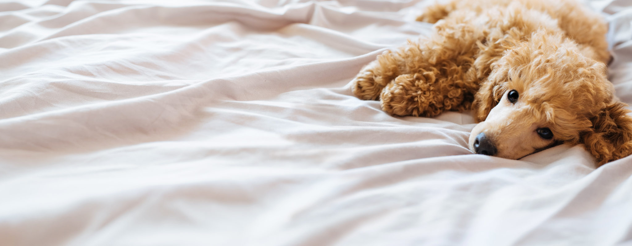 Sollte ich meinen Hund im Bett schlafen lassen? | Hundehaltung