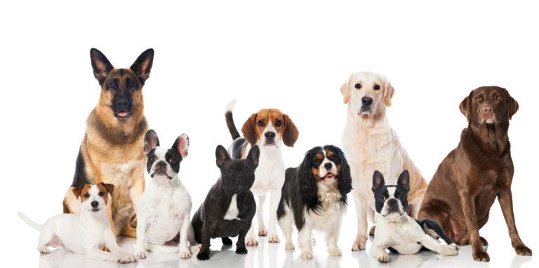 Rassespezifisches Futter für Hunde