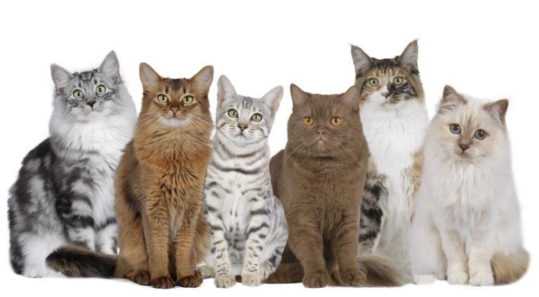 Rassespezifisches Futter für Katzen