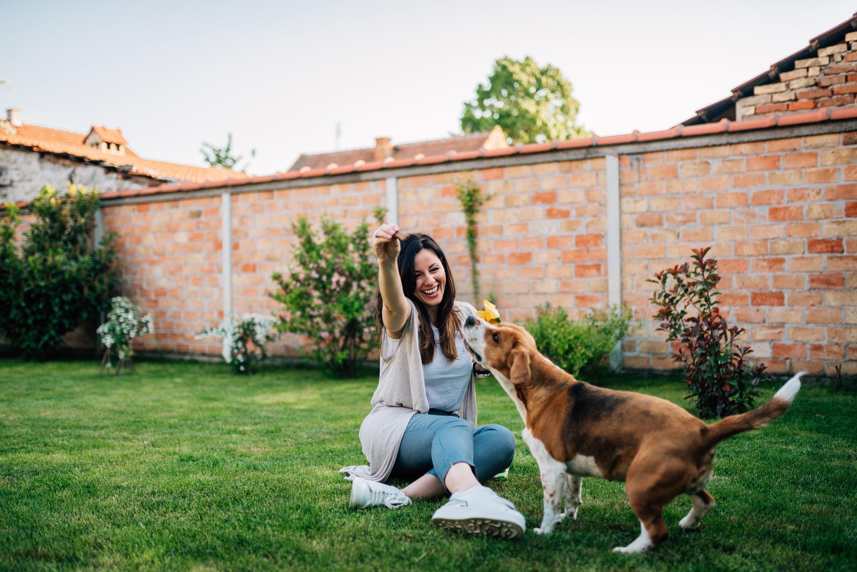 glücklich hund spielt