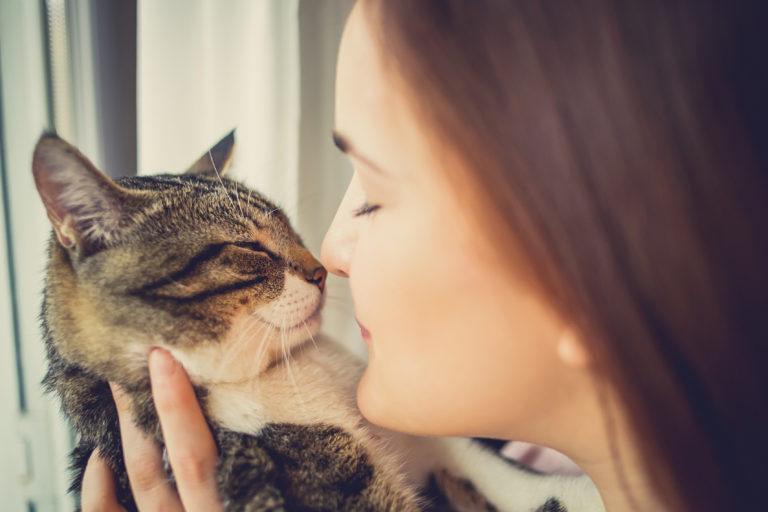 Hvorfor katte er gode for vores helbred