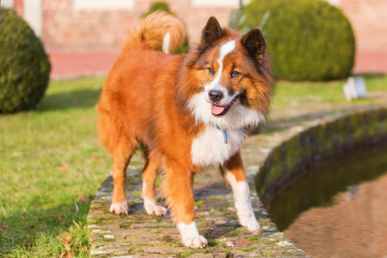 elo hund glücklich