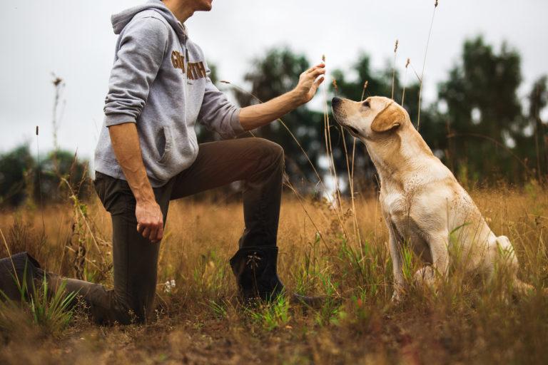 Antijagdtraining bei Hunden