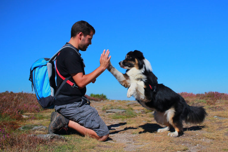 hund high five macht