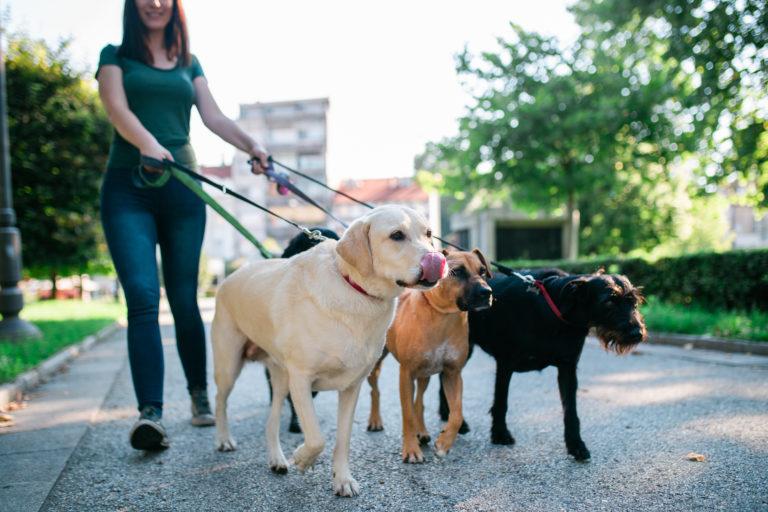 dogwalker werden