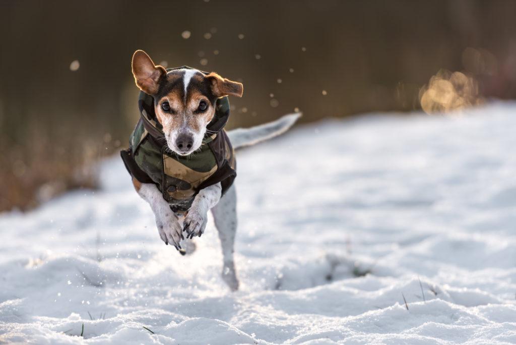 Hund glücklich im Schnee