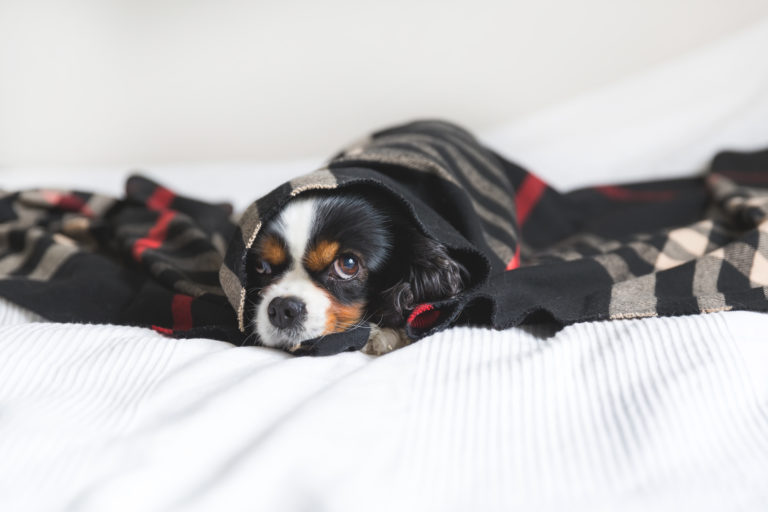 Unterkühlung beim Hund