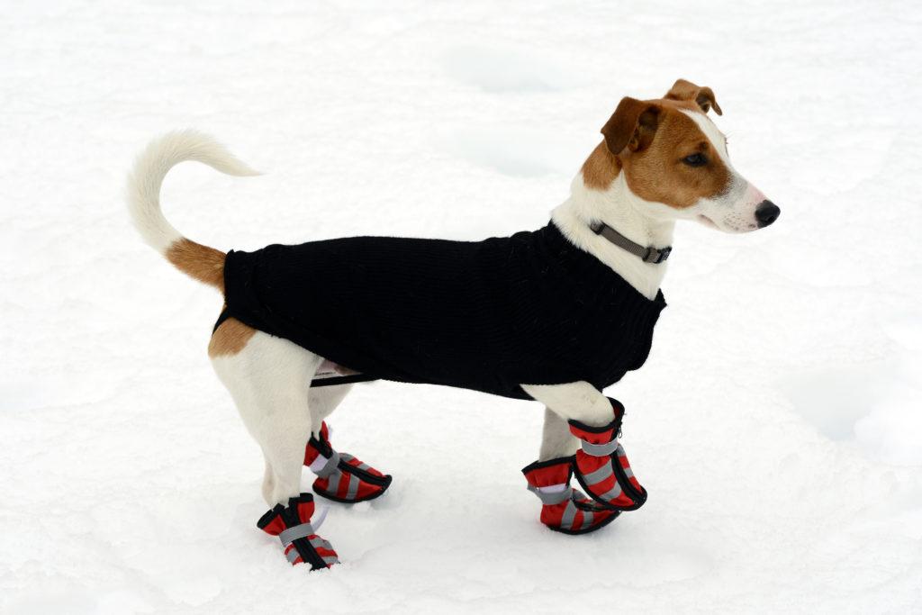 Hund im schnee mit hundemantel und schuhe