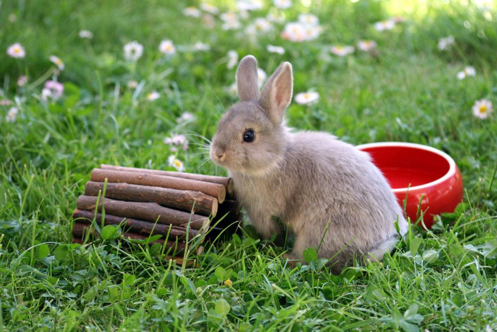 Kaninchen im grass