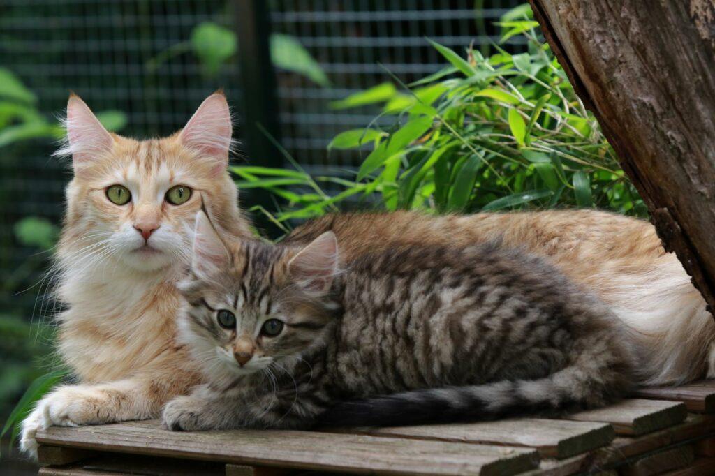 Artegerechte Katzenhaltung in einem abgetrennten Garten.