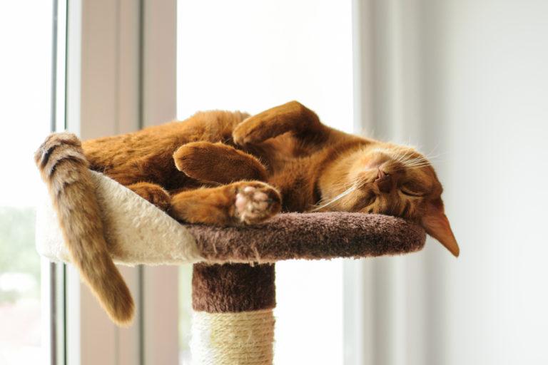 Bei einer artgerechten Katzenhaltung haben Katzen genug Rückzugsmöglichkeiten.